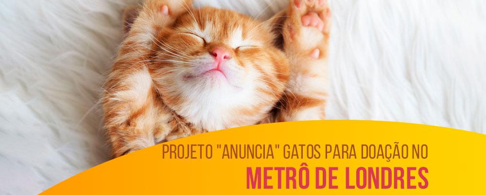 """Projeto """"anuncia"""" gatos para doação no metrô de Londres"""